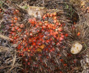 olio-di-palma-di-frutta_2943860